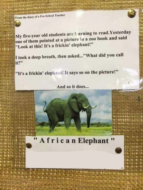 funny stories a frickin elephant