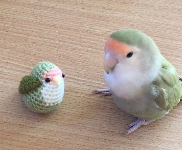 cute love bird