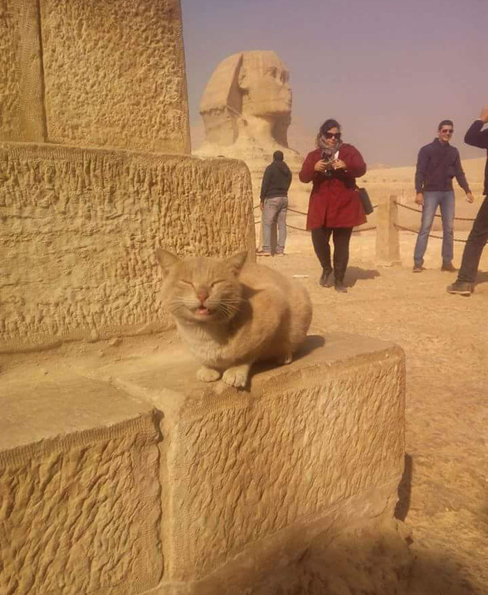 cat on Egyptian pyramids