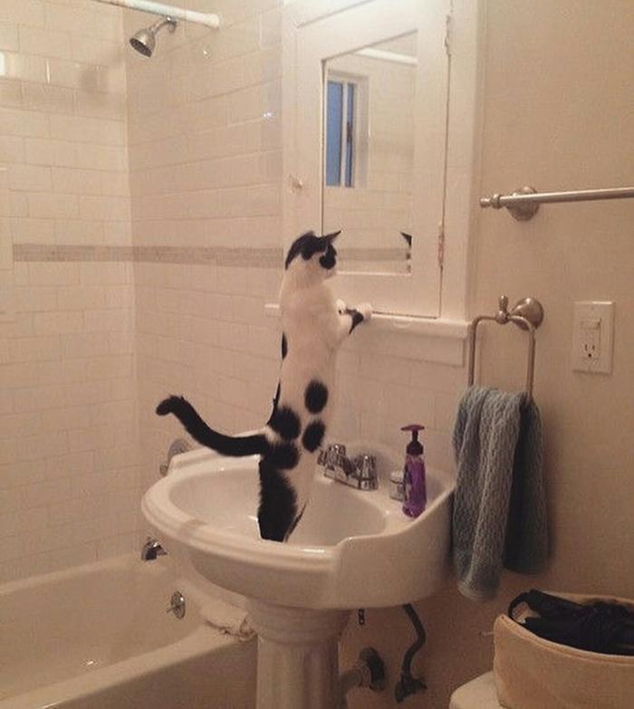 cat mirror funny