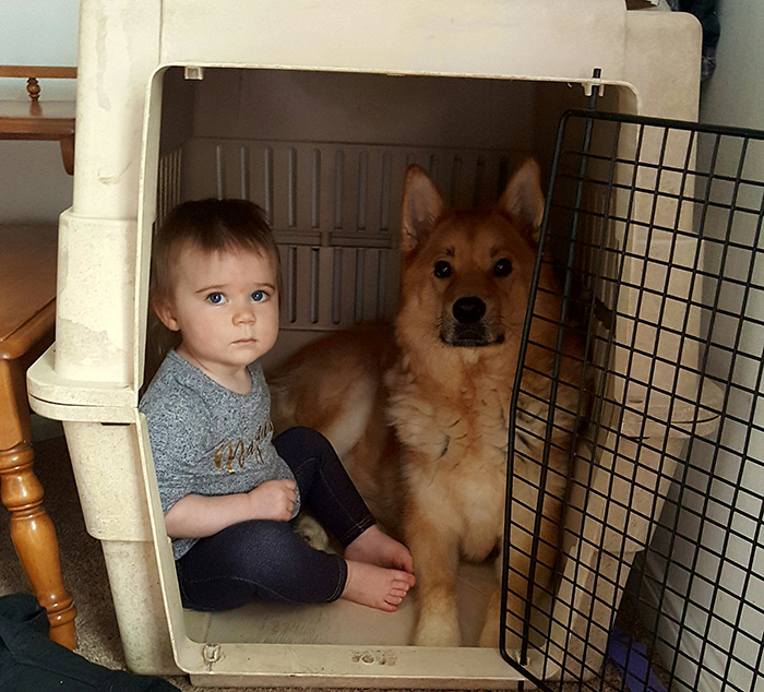 kid in dog crate