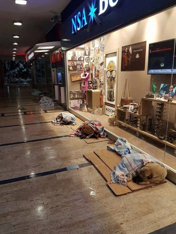 mall in turkey stray dogs sleep blankets  This Mall Lets Homeless Canines Sleep Inside With Blankets To Escape The Chilly fq9la mall lets stray dogs sleep with blankets 1