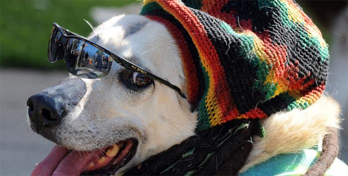 dogs like reggae music