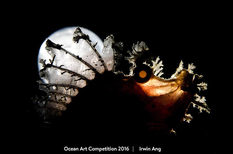 ocean underwater photography awards 2017