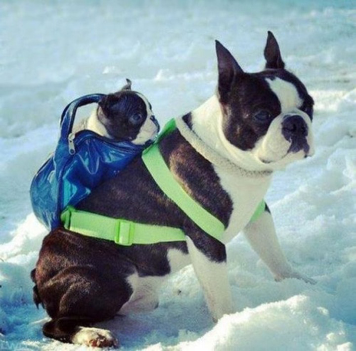 cute animals wearing backpacks