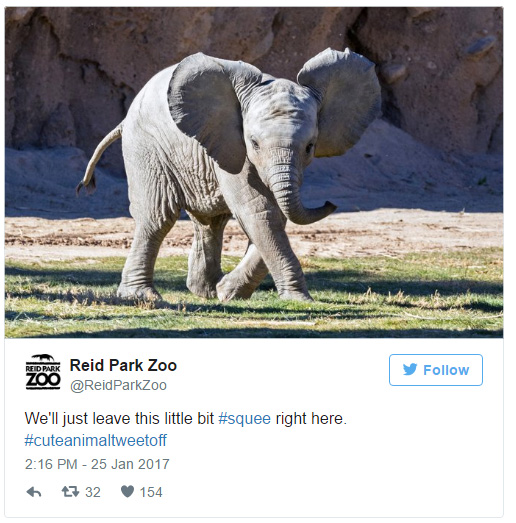 zoo cute animal tweet off