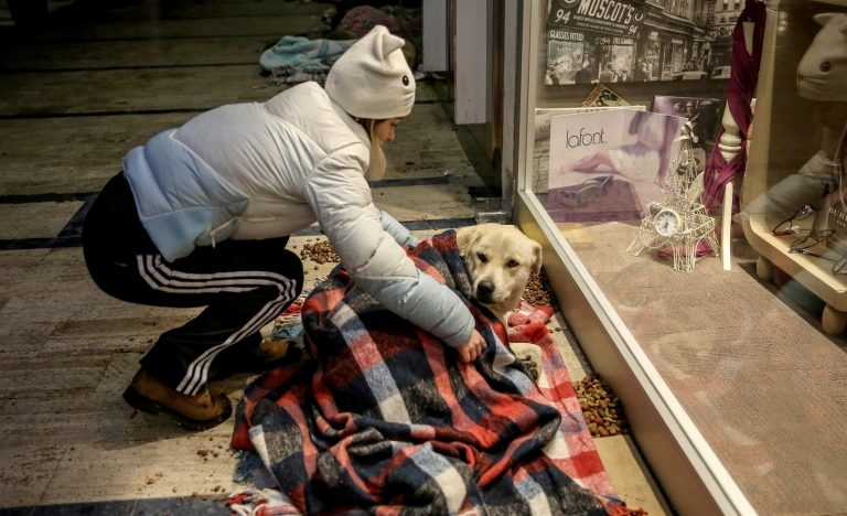 mall in turkey stray dogs sleep blankets  This Mall Lets Homeless Canines Sleep Inside With Blankets To Escape The Chilly l61s8 mall lets stray dogs sleep with blankets 3