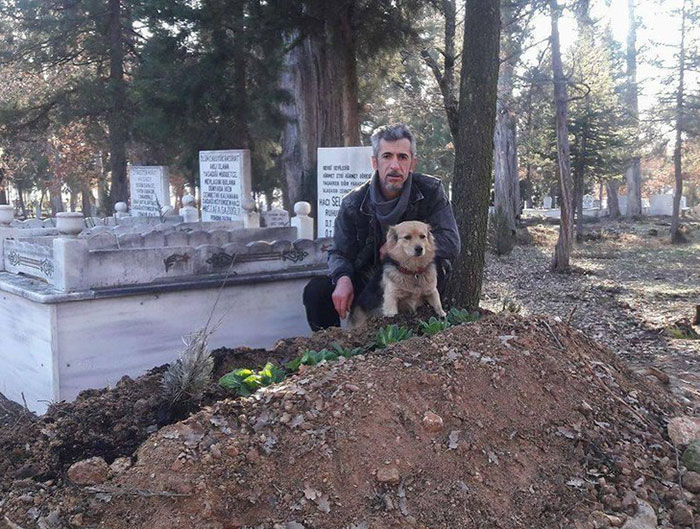 dog visits owners grave every day