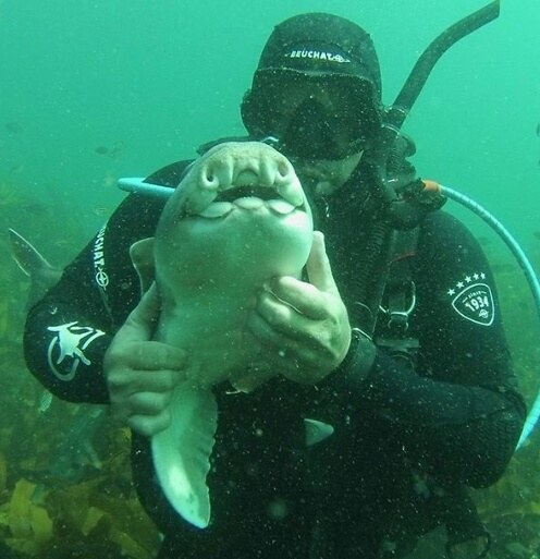 shark cuddles with diver