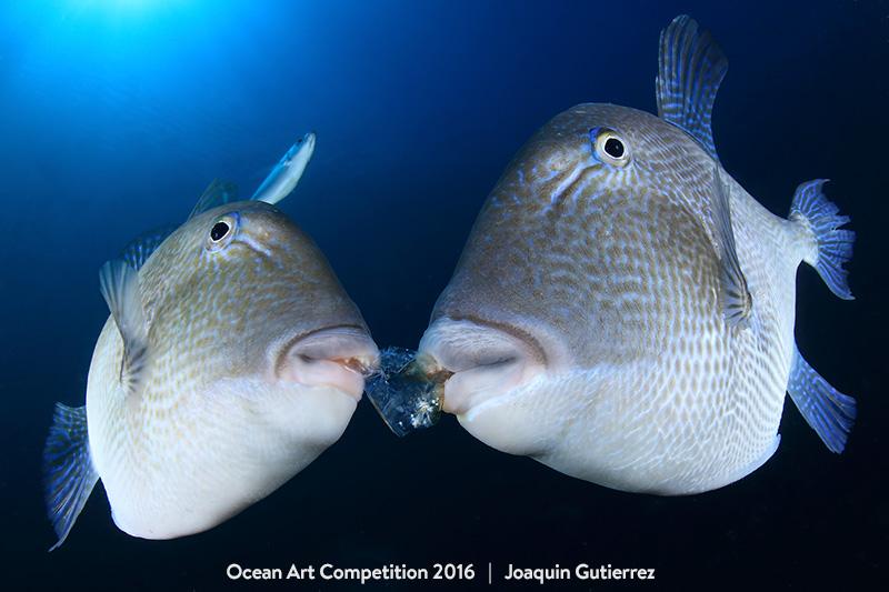 underwater photography awards
