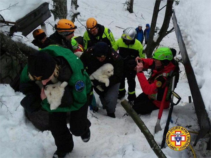 good news puppies found in avalanche