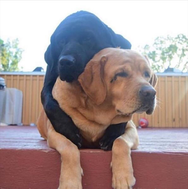 dogs hugging best friends