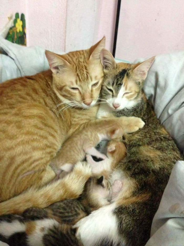 yello and tam cuddling with their kittens