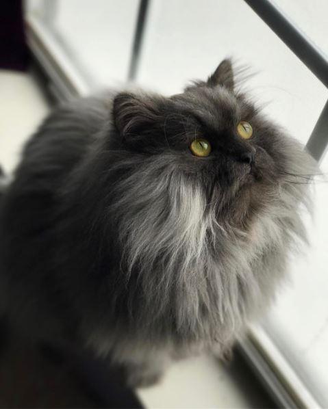 juno the cat 1