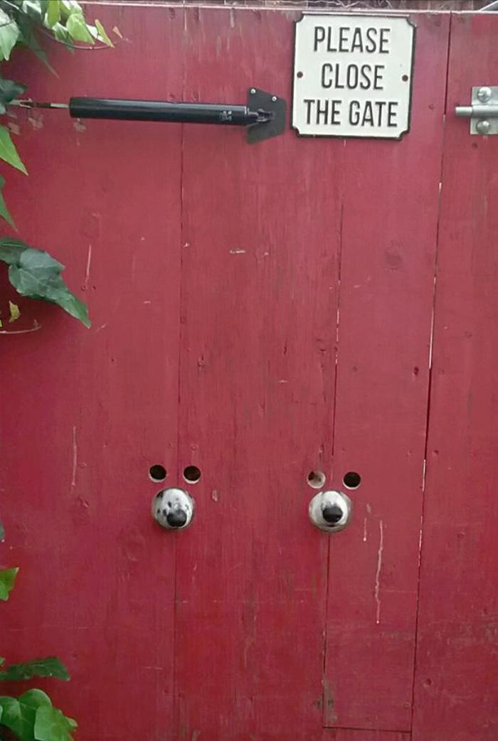 dog friendly gate