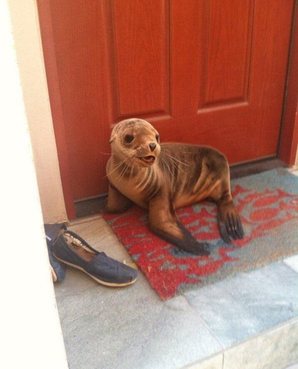 door is sealed