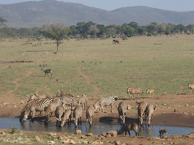 farmer brings wild animals water drought