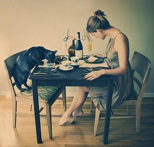 cat dinner date 8
