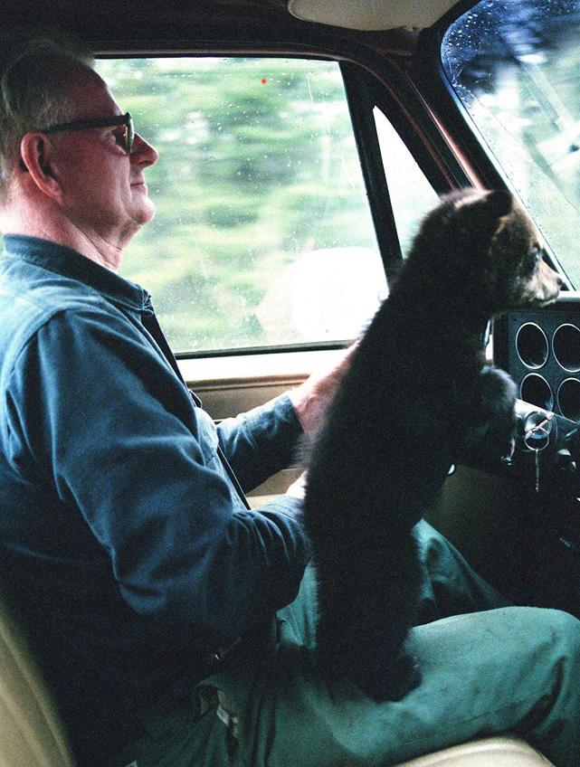 bear right car ride cute