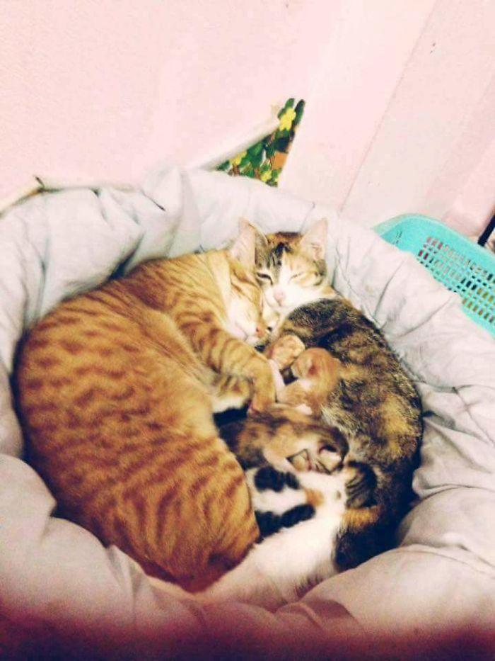 yellow and tam cuddling