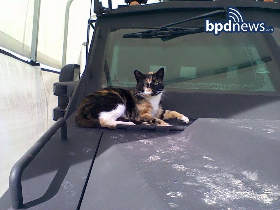 swat cat 1