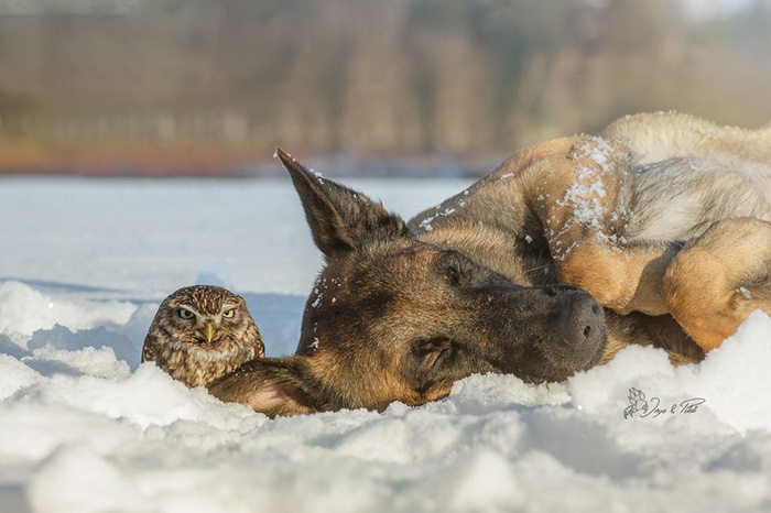 I Can T Stop Smiling At These Photos Of A Dog And His Owl