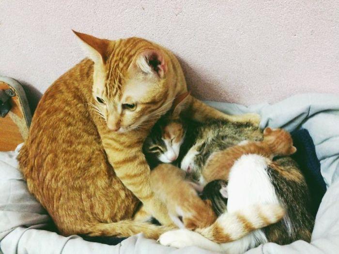 yello protecting his family