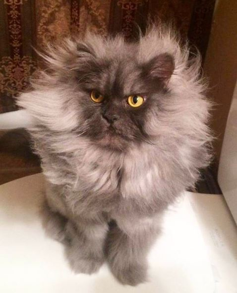 juno the cat 7