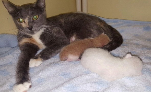 pregnant cat with two kittens found