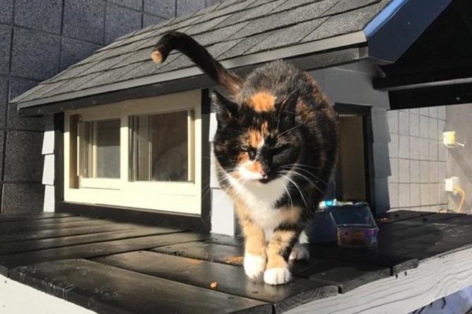 cops built cat house good news