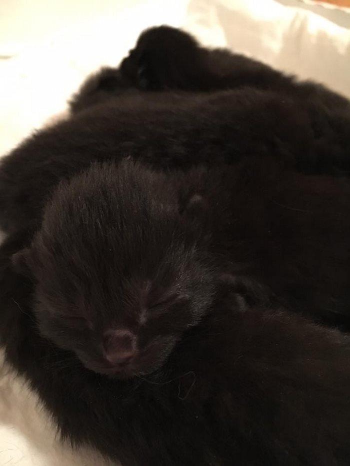 mini panther 9