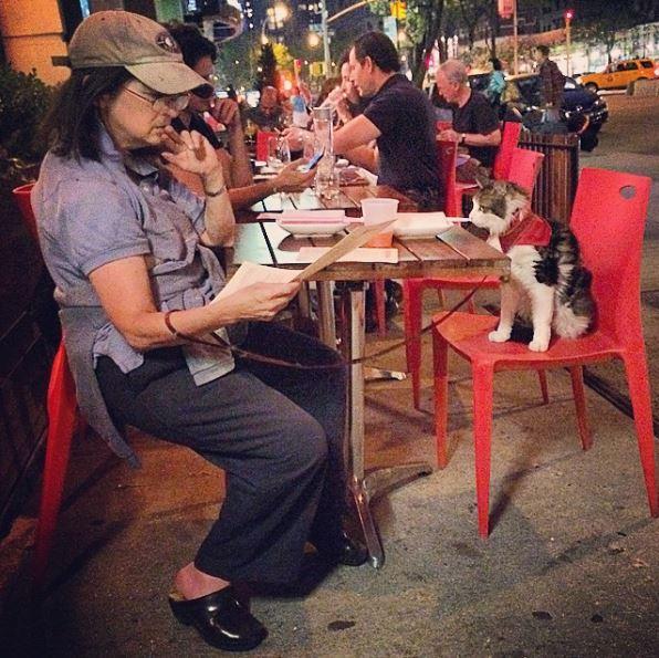 cat dinner date 5