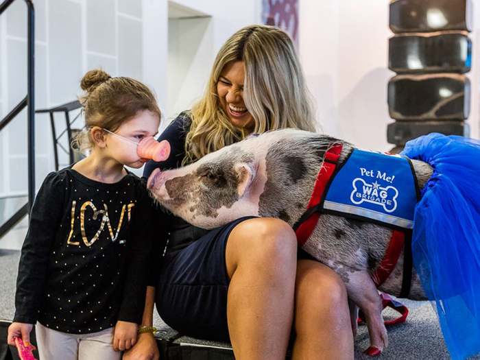 therapy pig lilou airport