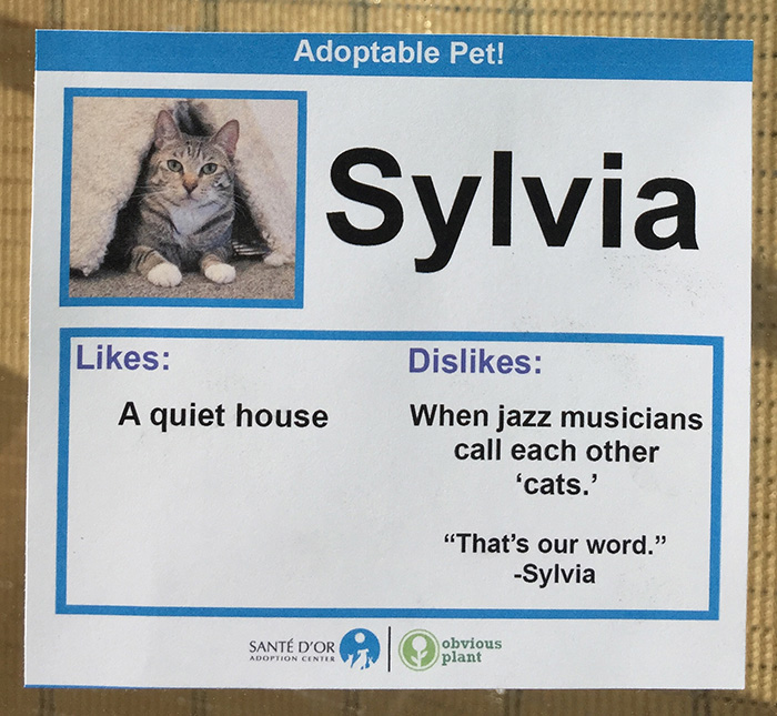 funny cat signs likes and dislikes