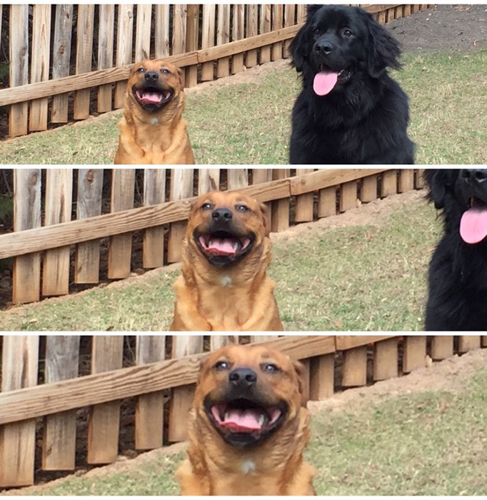 dog funny face gf
