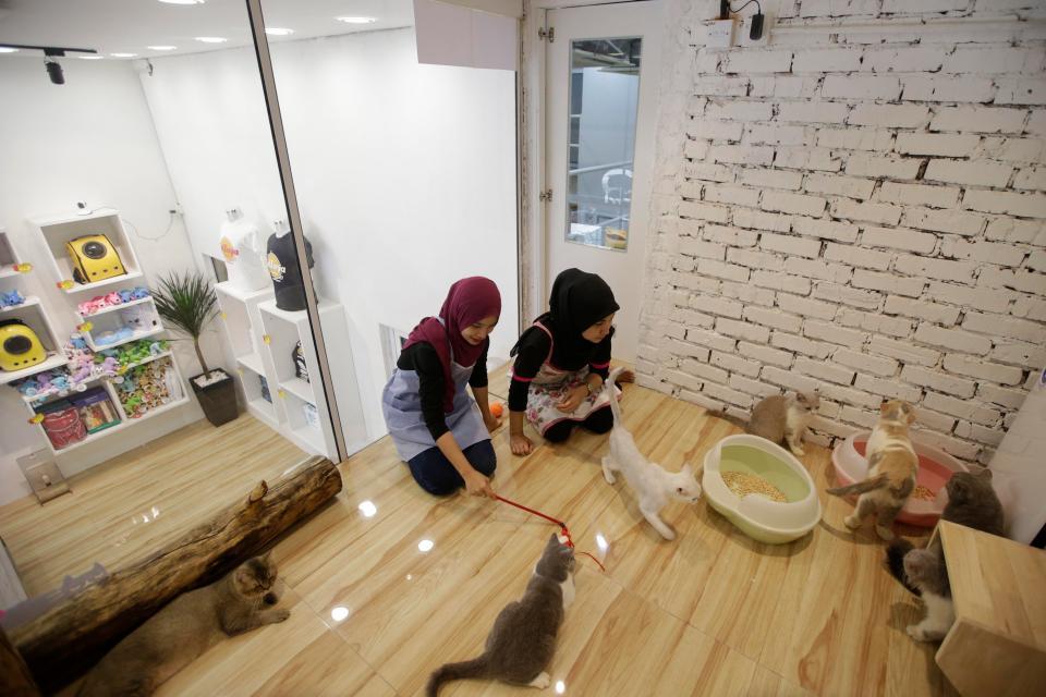cat hotel 2