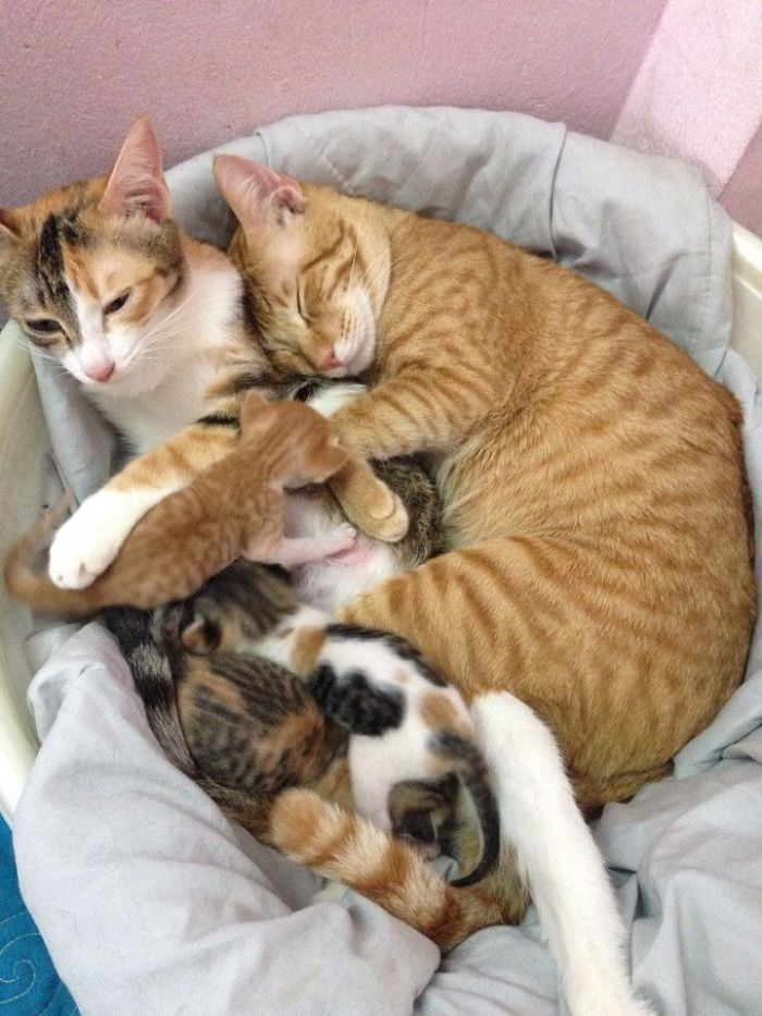 yello cuddling with his family