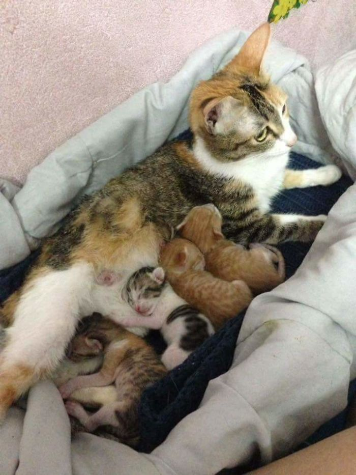 tam and her four healthy kittens