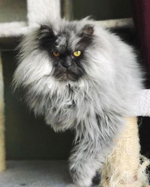 juno the cat 8