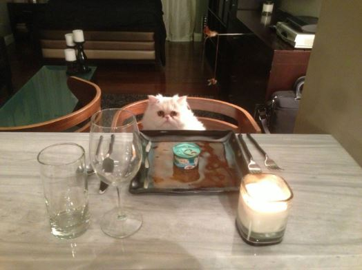 cat dinner date 2