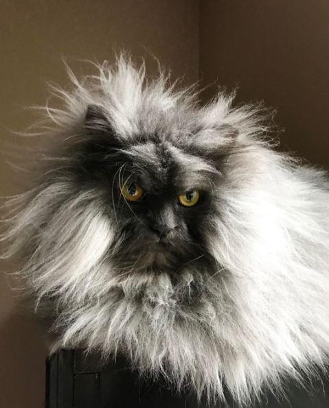 juno the cat