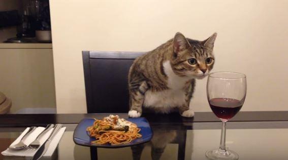 cat dinner date 11