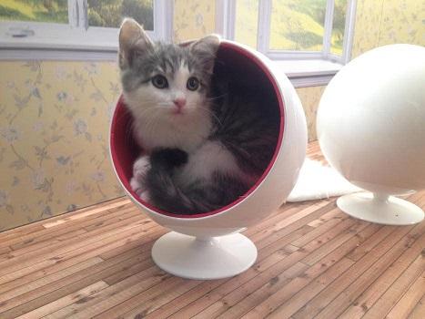 kitten stream 3