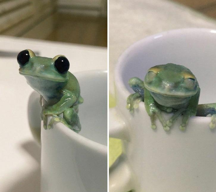 blinking frog happy eyes
