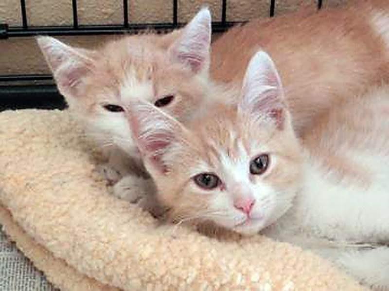 reunited cats 2