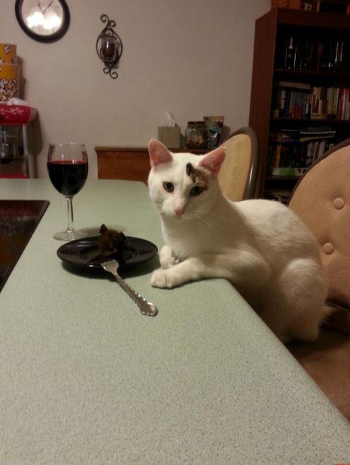 cat dinner date 6