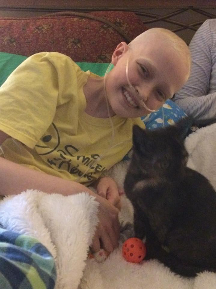 kitten heals family girl with cancer