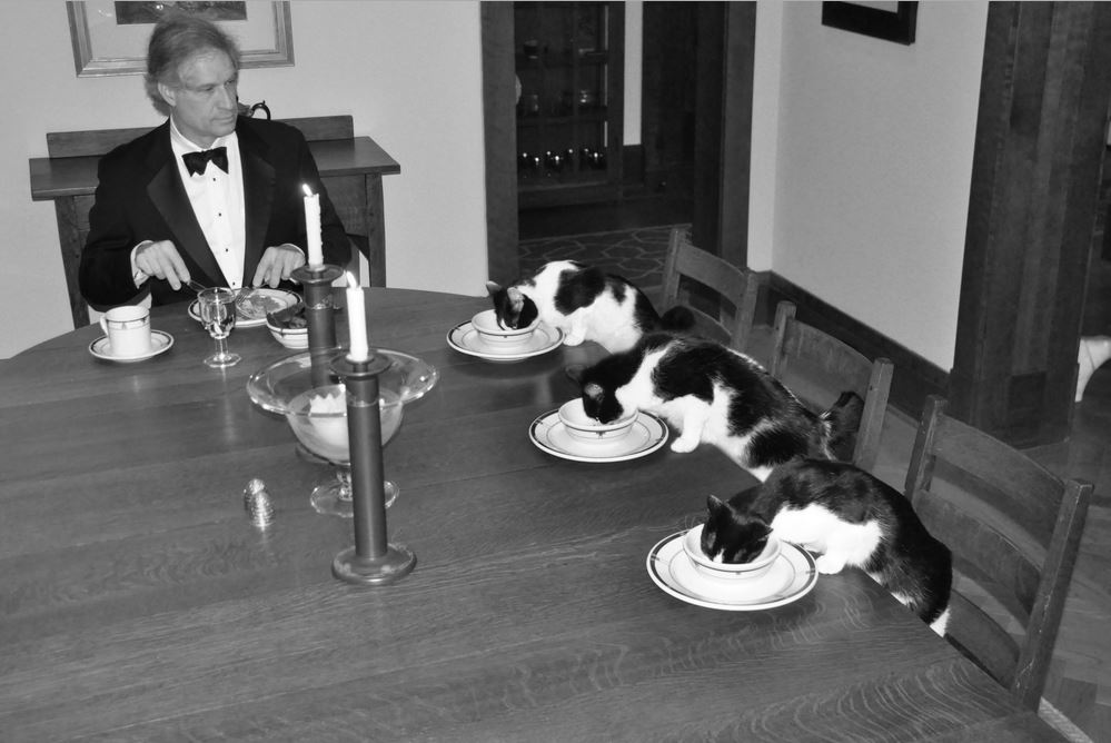 dinner with cats 10