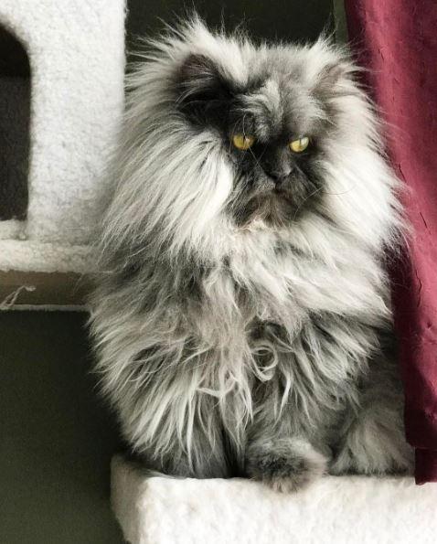 juno the cat 15