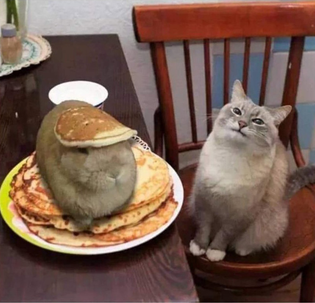 cat and hare in pancakes